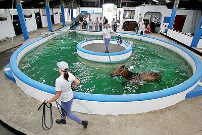 equine hydrotherapy pool in the North of England